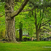 Majestic Trees of Gairloch Gardens, Oakville, Ontario, Canada