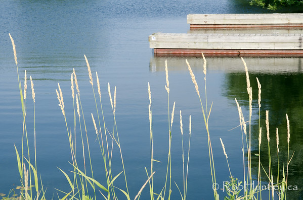 Grasses at the waters edge. By the shore of the St. Lawrence River in Cornwall, Ontario. Grasses in the foreground with a dock behind.  © Rob Huntley