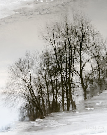 Trees reflected in the Rideau River near Manotick, Ontario. © Rob Huntley