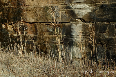 Vegetation along the weeping walls of the mining roads at the Marmora Iron Mine, Marmora, Ontario. © Rob Huntley