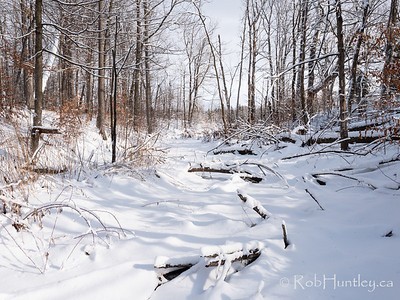 Creekbed in winter.