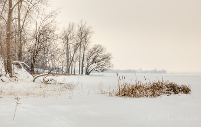 Cattails along the Ottawa River shoreline in winter. This location is just 10 minutes by foot from my house. Backstory on my blog. © Rob Huntley