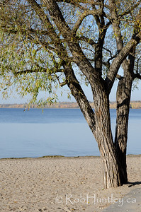 Tree at Westboro Beach, Ottawa Riven the Fall. © Rob Huntley 2012