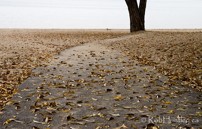 The sidewalk to the tree - Westboro Beach in the Fall. © Rob Huntley