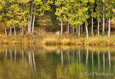Mill Pond Reflections. Trees reflected on the surface of a mill pond in Eastern Ontario. License this photo on Getty Images © Rob Huntley