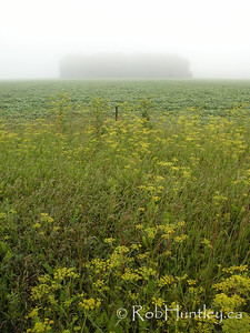 Farm field with woodlot shrouded in fog in the distance. Diamondview Road between Carp and Kinburn, Ontario. © Rob Huntley