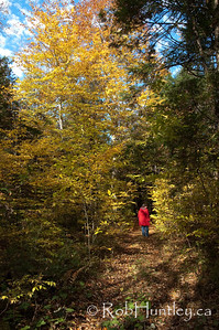 Autumn walk on the Rideau Trail. Woman in a red jacket strolling along a portion of the Rideau Trail in the Ottawa Valley near Burritt's Rapids. © Rob Huntley