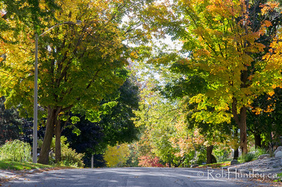 Hill on a city street. Autumn in my neighbourhood. © Rob Huntley