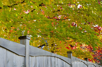 Fence and colour. Not far from my house. Autumn in my neighbourhood. © Rob Huntley