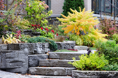 Autumn in My Neighbourhood. Golden Sumac showing its fall colours in a terraced rockery entrance to a home. © Rob Huntley 2012