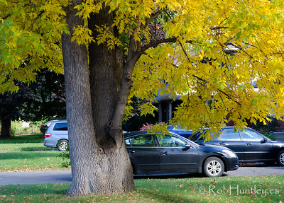 Autumn in My Neighbourhood. © Rob Huntley