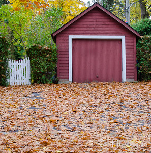 Gate, garage and leaves. Autumn in My Neighbourhood. © Rob Huntley