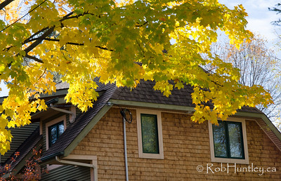 Colour out the window. Autumn in my neighbourhood in the Highland Park area of Ottawa near Westboro.