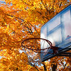 Roadside basketball net with autumn colours.<br /> © Rob Huntley