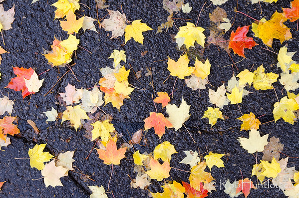 Fallen leaves on wet pavement.