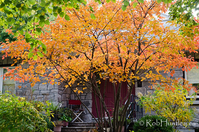 Autumn in My Neighbourhood. © Rob Huntley 2012