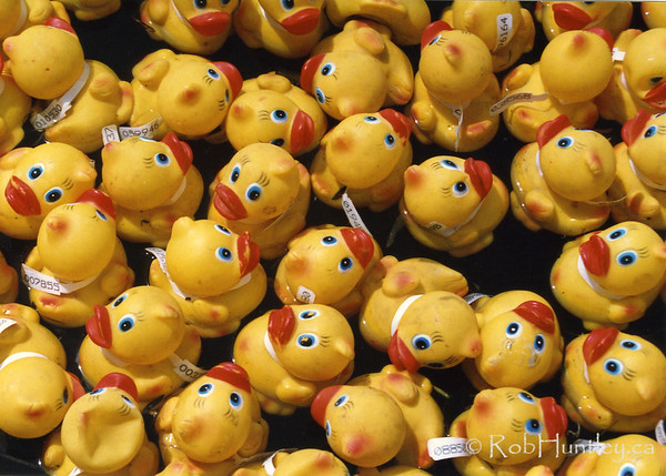 Annual rubber duck race
