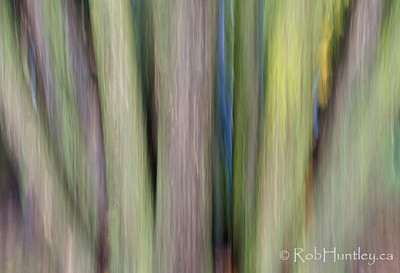 Tree Trunks. Autumn in My Neighbourhood. Intentional camera movement. © Rob Huntley