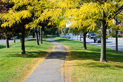 Autumn in my neighbourhood in the Highland Park area of Ottawa near Westboro. © Rob Huntley 2012