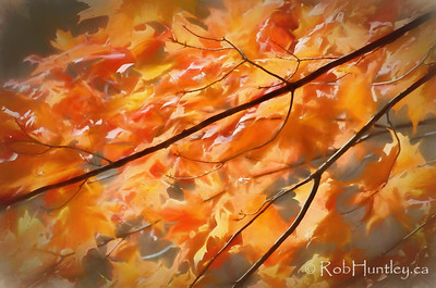 Maple Leaves on Fire
