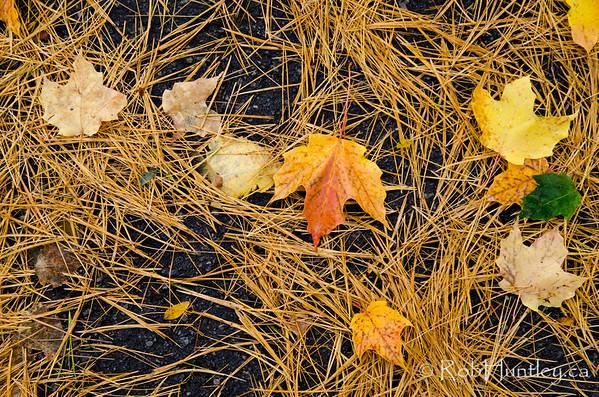 Leaves and Pine Needles.