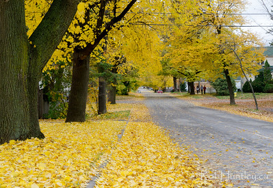 Keenan Avenue. Autumn in My Neighbourhood. © Rob Huntley