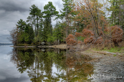 Dead tree on the point, viewed from the river side. Pinhey's Point Heritage Property and Park. © Rob Huntley 2012