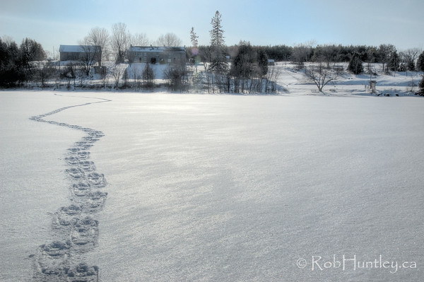 Snowshoe tracks lead from the end of the point to the house. (lens flare on the house). Pinhey's Point Heritage Property and Park. © Rob Huntley