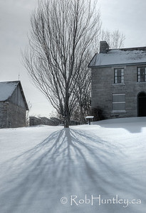 Tree shadow. Pinhey's Point Heritage Property and Park. © Rob Huntley
