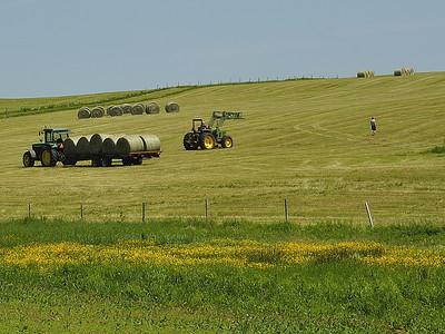Prince Edward Island / Ile-du-Prince-Edward: le temps des foins / Harvest time.