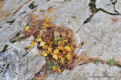 Brebeuf, Qc, Canada; small town near Mont-Tremblant, autumn / petite municipalité près du Mont-tremblant,  automne