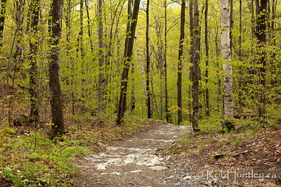 Hiking trail at Mackenzie King Estate, Gatineau Park.  © Rob Huntley