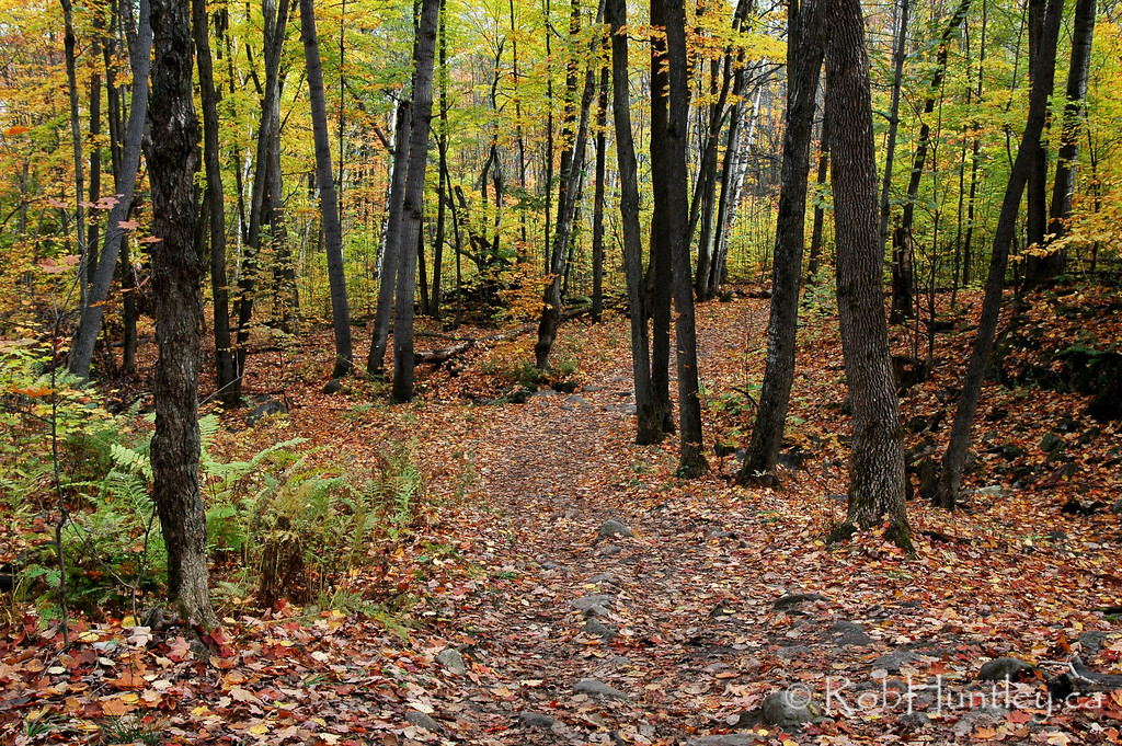 Hiking Trail in Autumn, Gatineau Park, Quebec. Near Ottawa, Ontario, Canada.  License this photo on Getty Images  © Rob Huntley
