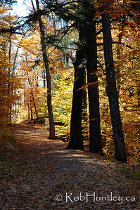 Fall colours on a hiking trail in Gatineau Park.