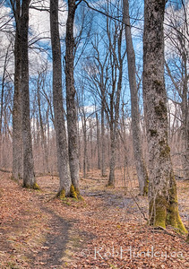 Spring hike in Gatineau Park, Quebec  © Rob Huntley