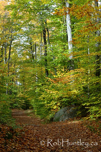 Hiking Trail in the Fall, Gatineau Park, Quebec.