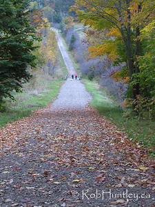 Hiking trail covered in coloured leaves in the fall.  © Rob Huntley
