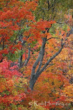 Fall colours in Gatineau Park, Quebec. © Rob Huntley