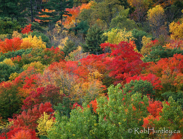Fall colours in Gatineau Park