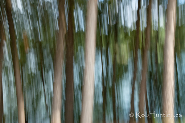 Streaky Trees at Big Cedar Lake 1. Vertical Panning at slow shutter speed to produce streaky trees. Big Cedar Lake in the background. Near Messines, Quebec.  © Rob Huntley