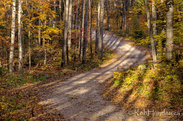 Tree shadows on a winding dirt road.