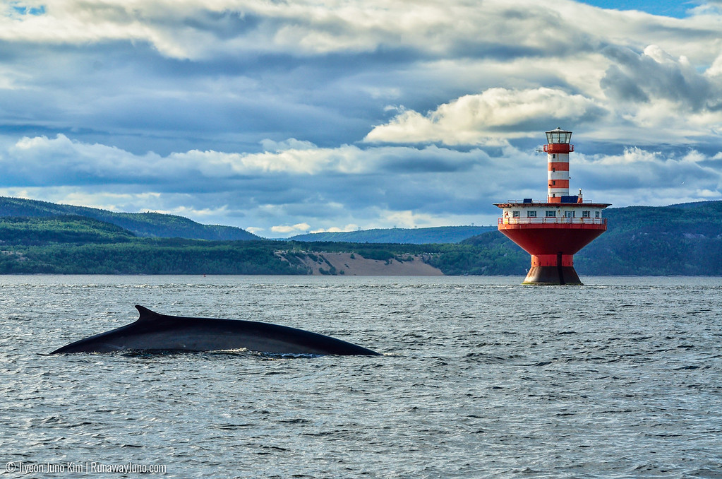 Whale Watching at with Quebec Maritime in Tadoussac
