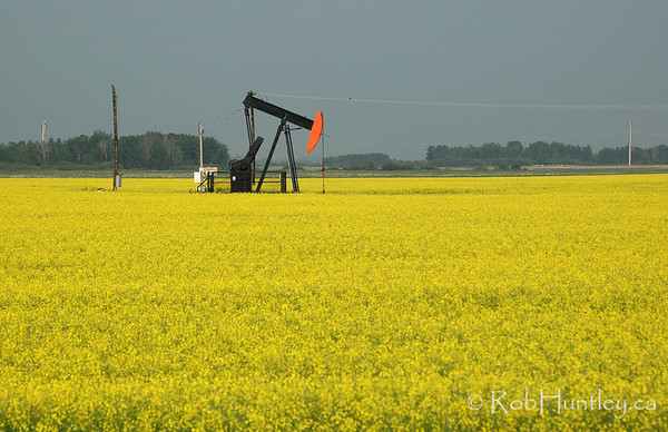 Oil drilling pump in a canola field in southern Saskatchewan.
