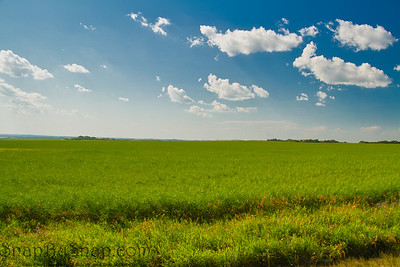 A Summer Field with Blue Skies