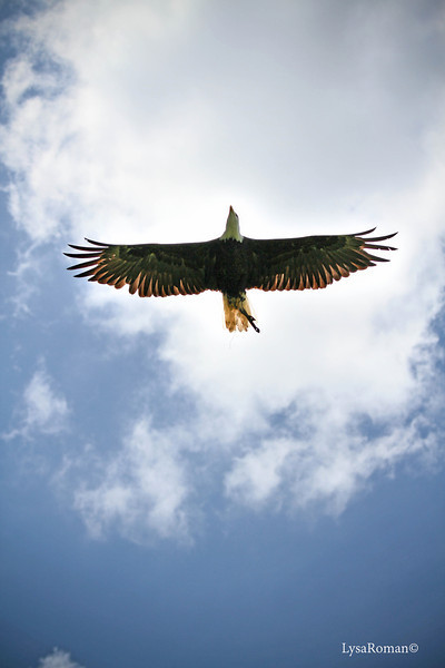 Manwe flying over our heads in the flight demonstration