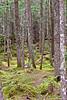 Open forest near Whistler, BC
