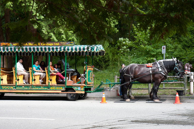 Horse Drawn Carraige Ride, Stanley Park, Vancouver