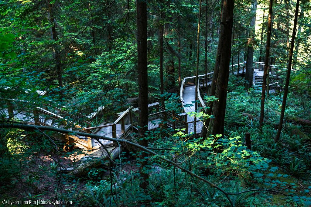 Nature's Edge Board Walk