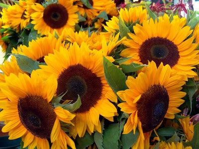 Sunflowers, Granville Island Market