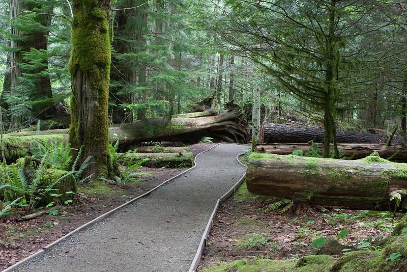 Old growth Cedar and Douglas Fir on Vancouver Island